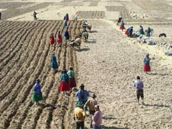 Peasants communally plowing and planting on the road to the Bolivian border